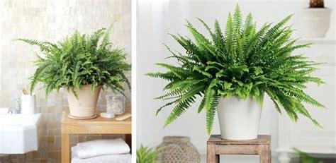 decoracion de interiores con plantas de sombra decoracion con plantas de interiores buscar con google