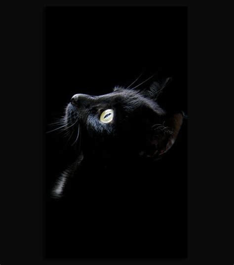 cat wallpaper hd for mobile black cat hd wallpaper for your mobile phone