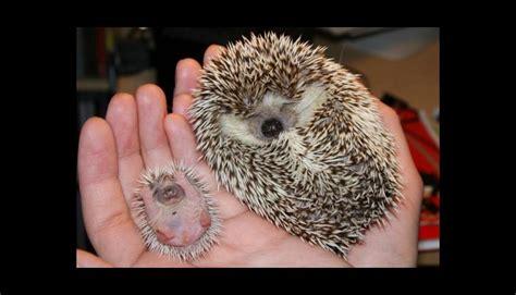 imagenes animales recien nacidos los 10 animales reci 233 n nacidos que te arrancar 225 n un