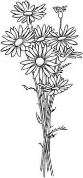 secret garden coloring book nz desenho de margaridas para colorir desenhos para colorir