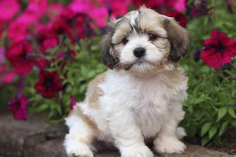 how to keep dogs from digging in flower beds how to stop a dog from digging in flower beds cuteness