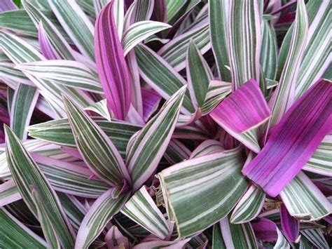 purple and green plants flickr photo sharing