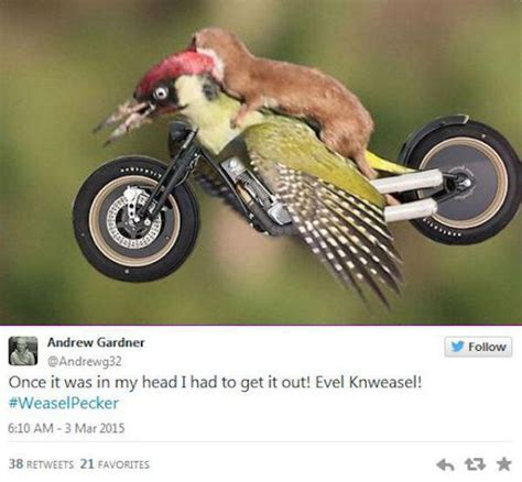 hilarious memes of the weasel riding the woodpecker 22