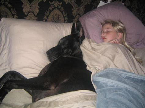 great dane bed 12 reasons great danes are the worst breed ever