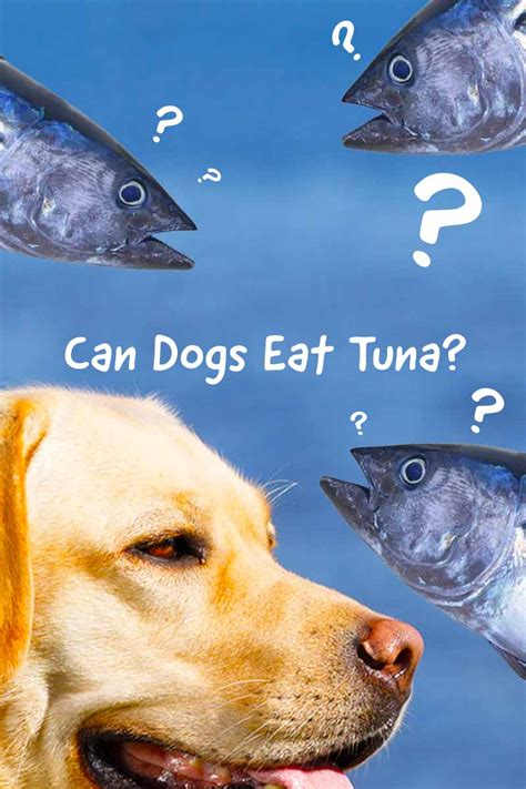 can dogs tuna can dogs eat tuna should we worry about mercury and how much is safe