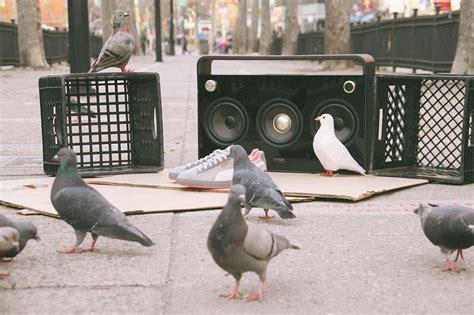 Sepatu X Staple Pigeon 2 staple x suede quot pigeons quot mass appeal