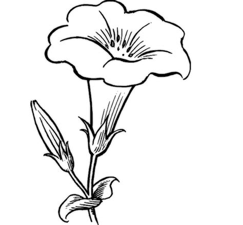 desenho flores desenhos de flores 30 imagens para imprimir e colorir