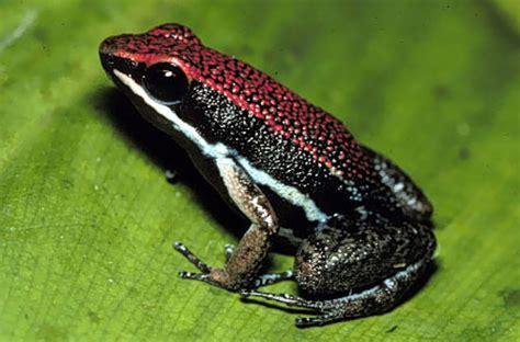 justin bieber dart tattoo justin bieber tattoos circulatory system of a frog