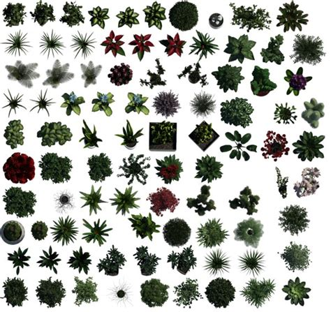 pattern photoshop vegetation texture other plants top plant