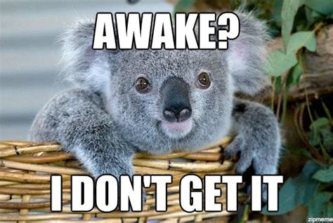 Meme Generator Koala - high koala is high awake i don t get it weknowmemes
