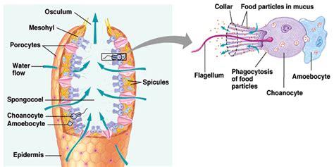 dunianya sari kisi kisi uts plantae dan animalia kelas x