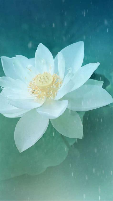 lotus flower desktop wallpaper best 25 lotus flower wallpaper ideas on lotus