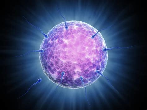 apparato genitale femminile interno l apparato genitale femminile che cosa fa e 232 fatto