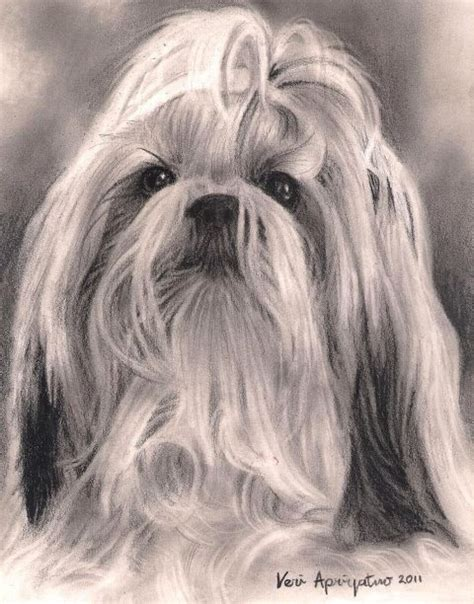 shih tzu drawing 209 best embroidery shih tzu images on drawings shih tzu and
