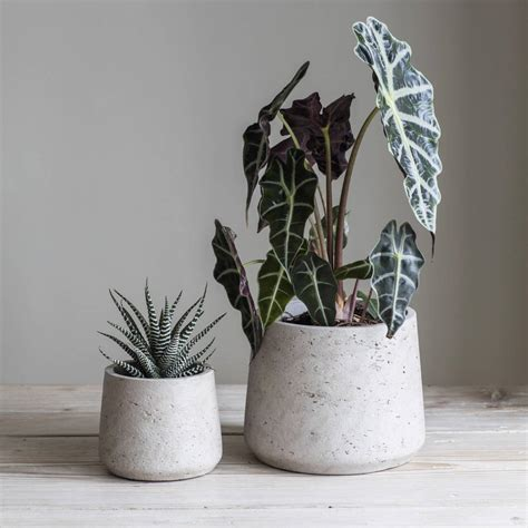 Cement Plant Pot Set Of Two By Idyll Home | cement plant pot set of two by idyll home