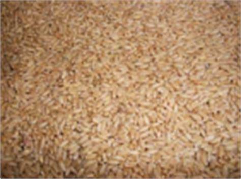 rabi bank thumbwheat seeds09062011085258046 jpg
