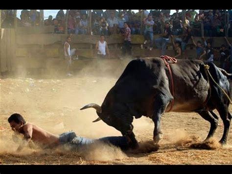 Bull Rage Live Bull S Rage