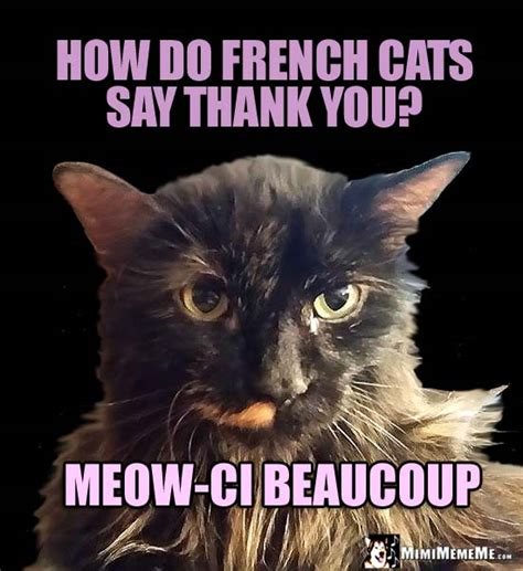 Thank You Cat Meme - she cat jokes pretty kitty riddles funny cat memes