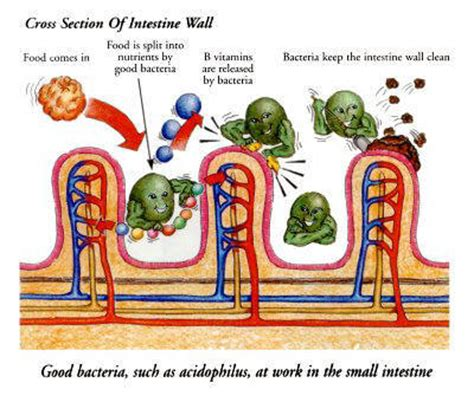 Is It Bad To Take Naltrexone Before Detox by A Five Step Strategy For Healing A Leaky Gut