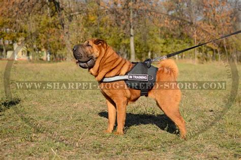 k9 search and rescue troubleshooting practical solutions to common search problems k9 professional series books shar pei harness with reflective trim and id patches