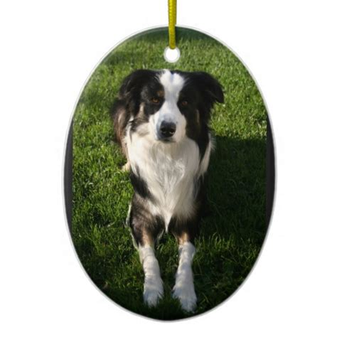 australian shepherd photo ornament zazzle