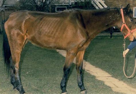 Cribbing Horses Treatment by Dental Examination From Vetstream Definitive Veterinary
