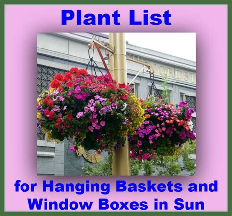 window box plants for sun 1000 images about window boxes pots baskets on