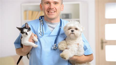 when can you neuter a puppy neutering dogs what you should 365vet