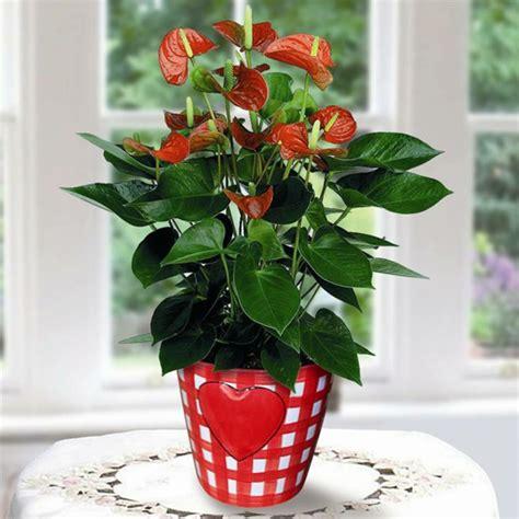 wohnideen mit pflanzen sch 246 ne zimmerpflanzen erf 252 llen die rolle dekoration