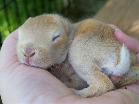 pet blog baby bunnies  spring