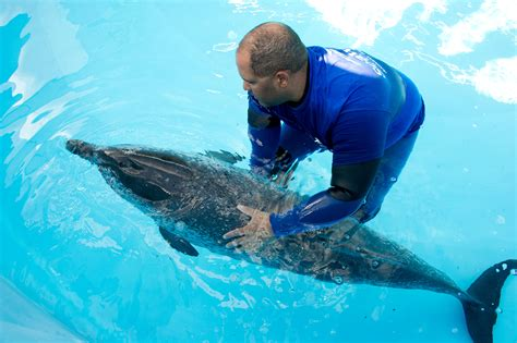 orlando shelter seaworld orlando rehabilitating a dolphin rescued from near panama city florida