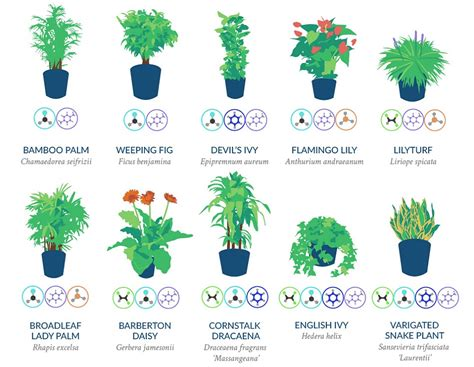 infographic  nasa guide  air filtering plants