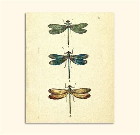 dragonfly home decor vintage dragonfly art print digital graphics animal