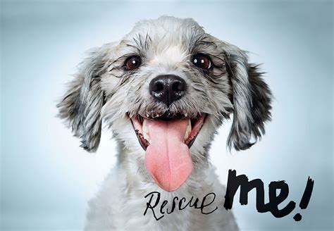 puppies and more rescue galleon rescue me adoption portraits and stories from new york city