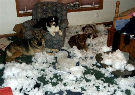 dog ate couch how to destroy your house amazing creatures