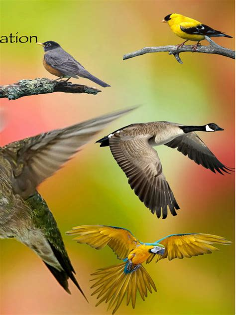 bird identification by color ornithology guide for