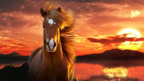 google images horses horse wallpaper android apps on google play