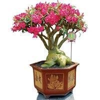 jual pot bunga harga murah berbagai model pot plastik