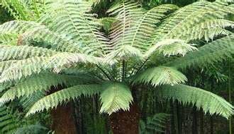 plants location