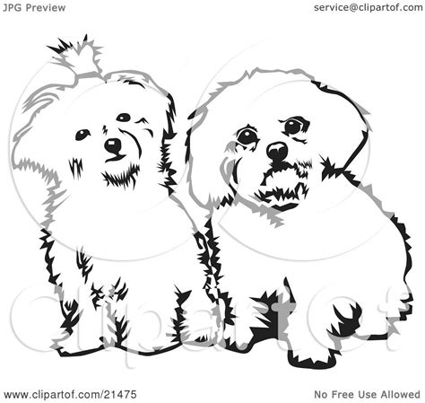 coloring pages of maltese puppies clipart illustration of two cute maltese dogs sitting side