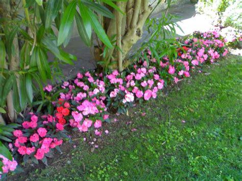 Nuova Guinea Fiore Sole by La Finestra Di Stefania Impatiens Nuova Guinea I Fiori