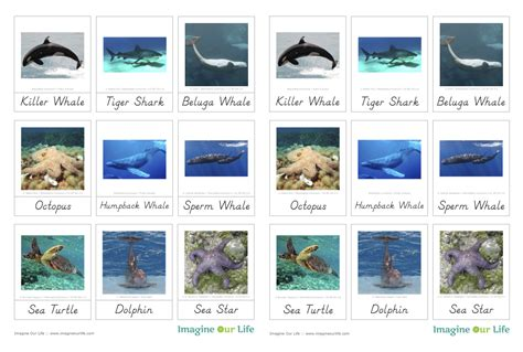 printable ocean animal cards animals of the ocean for the montessori wall map