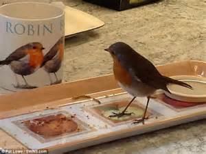 robin who comes bob bob bobbin in 15 times a day red
