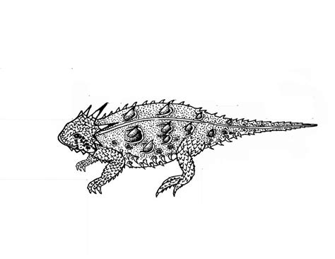 coloring page horned lizard coloring pages horned lizard printable for kids adults
