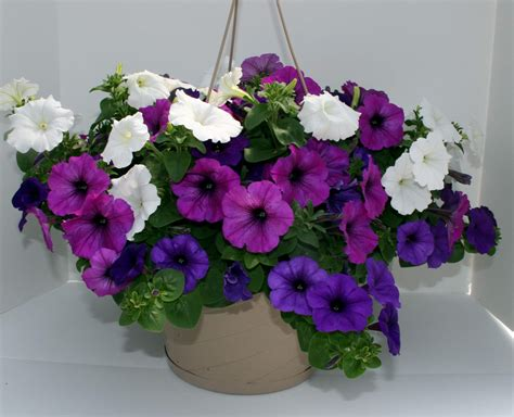 10 quot premium flowering hanging baskets schmidt bros inc