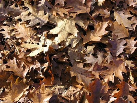 composting leaves   achieve fast leaf decay
