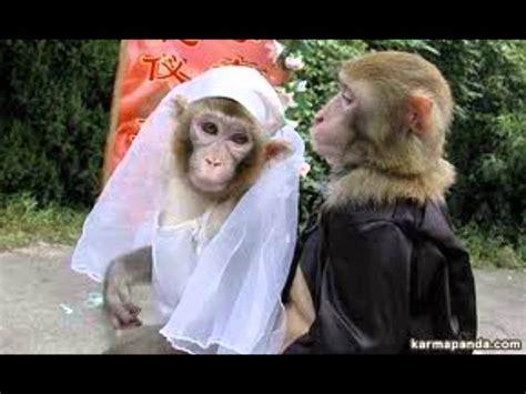 imagenes chistosos monos los monos m 225 s graciosos del mundo tinkiwinki youtube