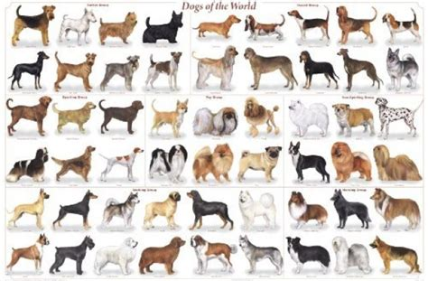 types of dogs chart breeds chart akc breeds litle pups