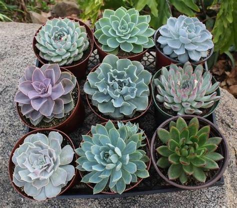 succulent containers for sale 25 best ideas about wholesale succulents on pinterest