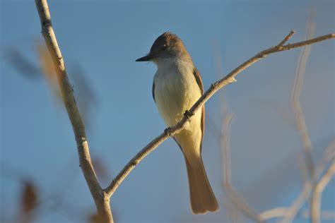 finding rare birds in arizona birdingthebrookeandbeyond